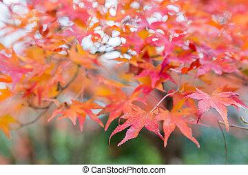 feuille, saison, arbre, automne, érable, pendant, rouges
