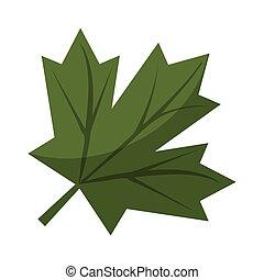 feuille, signe, vert, érable, canadien