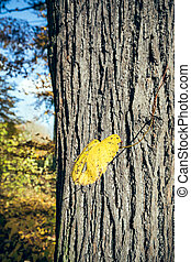feuille tombée, tronc arbre