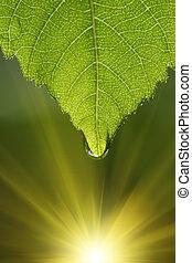 feuille, vert, macro