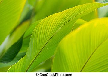 feuille verte