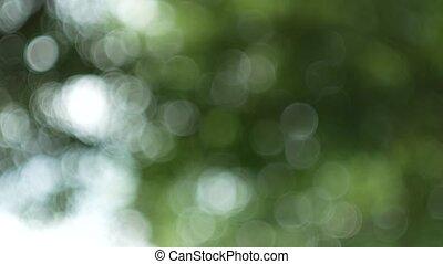 feuille verte, nature, résumé, foyer, bokeh, forêt verte, fond, coups, vent, dehors