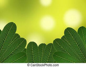 feuille verte, naturel, fond