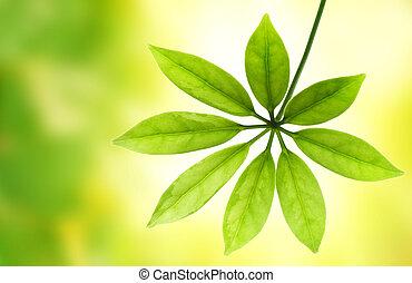 feuille verte, sur, arrière plan flou