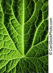 feuille verte, texture