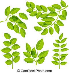 feuilles, éléments