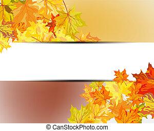 feuilles érable automne