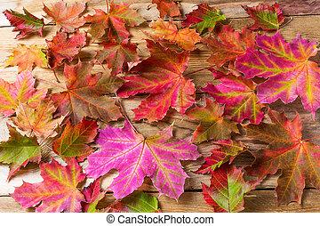 feuilles, érable, automne, fond, coloré
