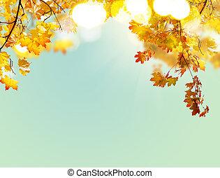 feuilles, érable, automne