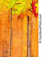 feuilles, érable, bois, automne