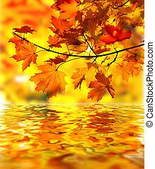 feuilles, érable, branche, automne