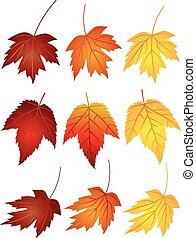 feuilles, érable, couleurs, illustration, automne