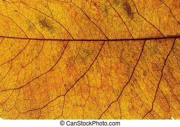 feuilles érable, fond