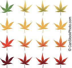 feuilles, érable, japon