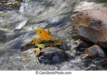 feuilles, érable, rochers