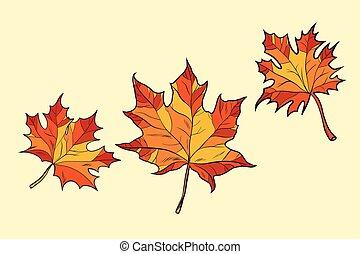 feuilles, érable, rouges