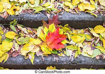 feuilles, étapes, coloré, escalier