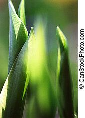 feuilles, 2, vert