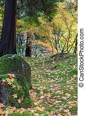 feuilles, arbre, érable japonais, rochers