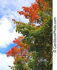 feuilles, arbre, automne