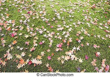 feuilles, arbre, champ, mousse, baissé, érable