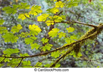feuilles, arbre vert