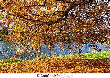 feuilles, arbres, automne