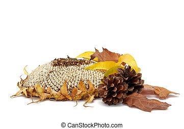 feuilles, arragement, automnal