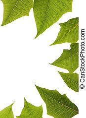 feuilles, arrière-plan vert, blanc, frontière, sur