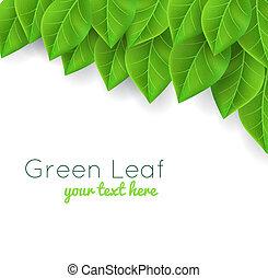 feuilles, arrière-plan vert