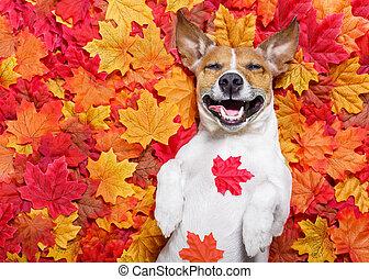 feuilles, autmn, chien, automne
