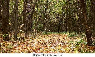 feuilles autome, dans, automne, parc