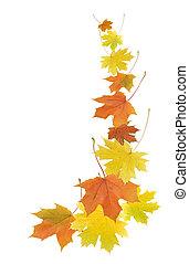 feuilles autome, frontière