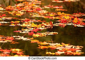 feuilles autome, sur, étang