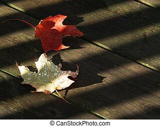 feuilles autome, sur, bois