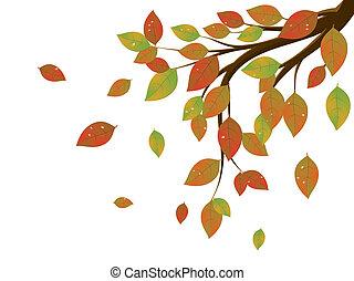 feuilles autome, sur, branche