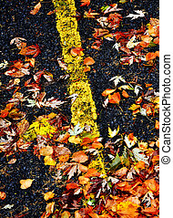 feuilles autome, sur, route