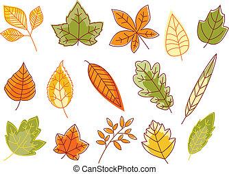 feuilles, automnal, coloré, isolé