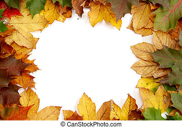 feuilles, automnal, coloré