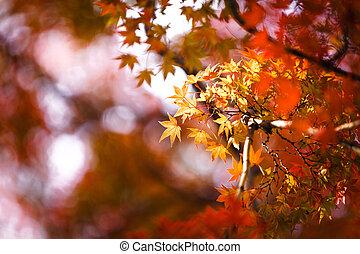 feuilles, automnal, jaune, arrière plan flou, érable