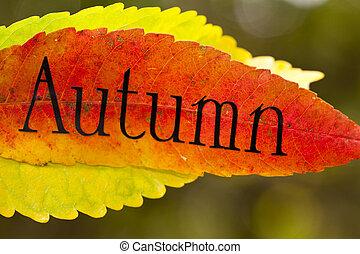 feuilles automne, à, lettres