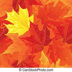 feuilles automne, érable