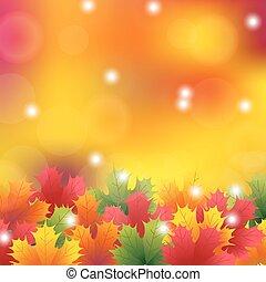 feuilles automne, érable, fond