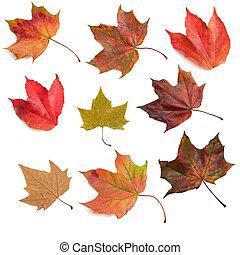 feuilles automne, 2