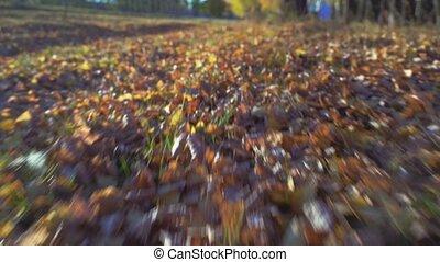 feuilles, automne, allen