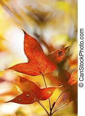 feuilles automne, arrière-plan rouge