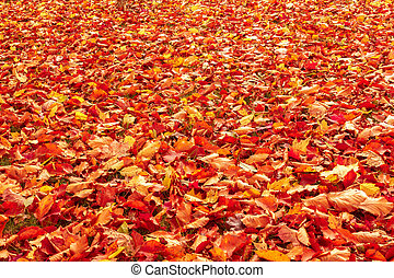 feuilles, automne, automne, orange, rouges, terrestre