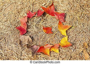 feuilles automne, baissé, cycle vie