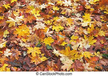 feuilles automne, baissé