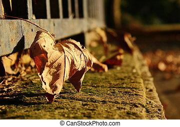 feuilles automne, barrière